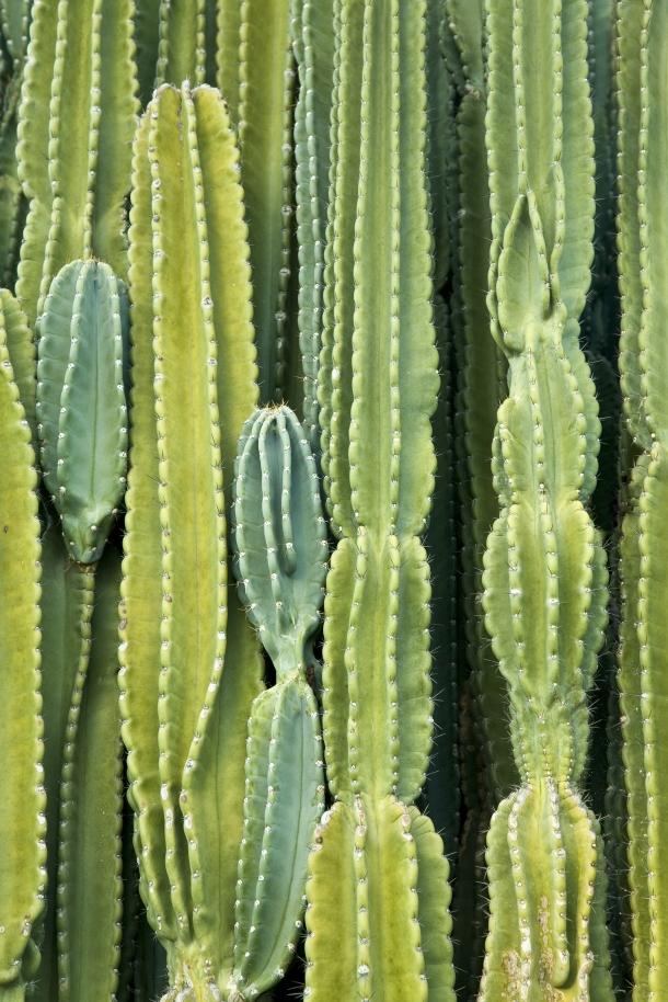 azm_cactusbackground